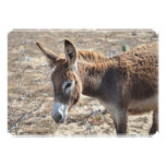 Adorable Donkey Card