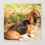 Basset Hound Sitting Invitations