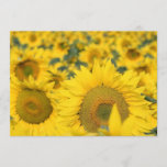 Field of Sunflowers Invitation