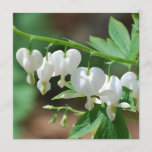 Flowering Bleeding Heart Invitations