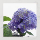 Hydrangea Bush Invitations